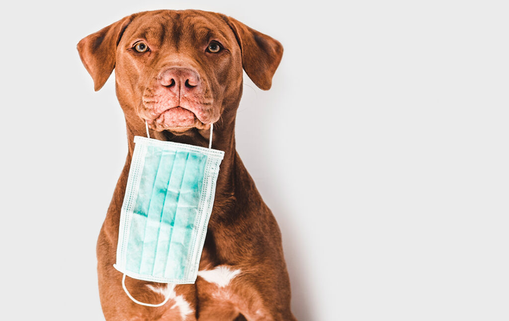 Kan dit kæledyr få coronavirus?