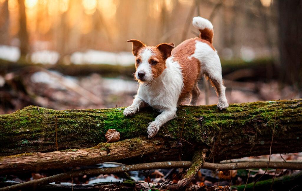 5 nemme veje til at holde din hund smidig