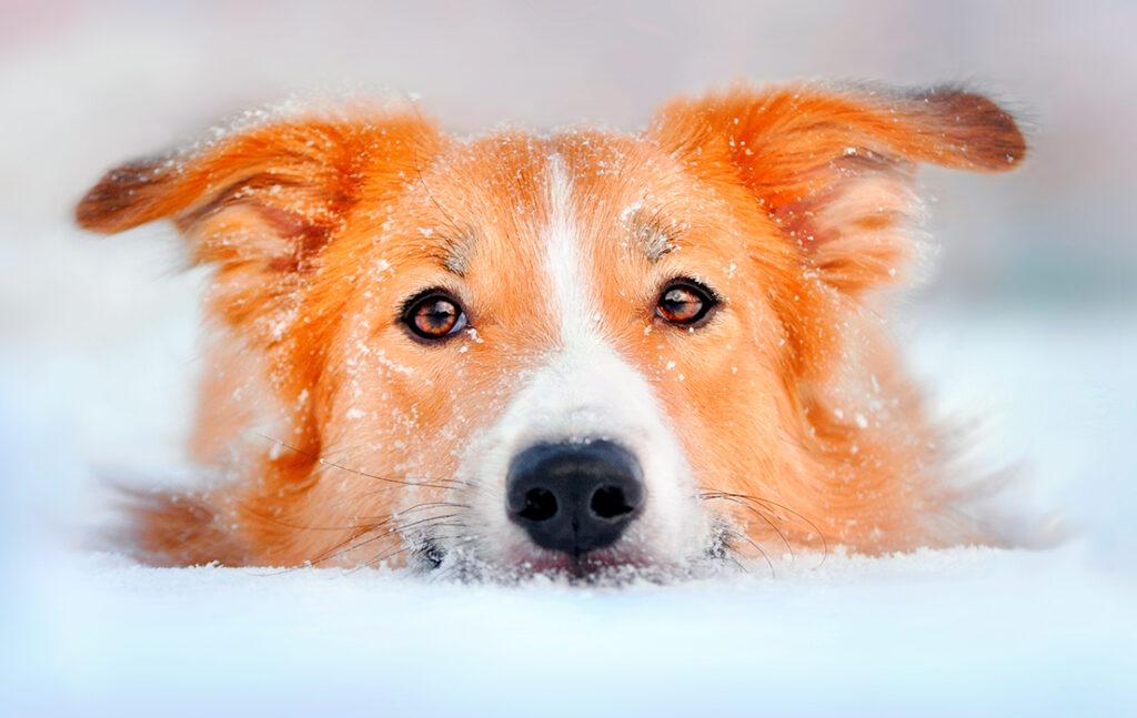Sådan passer du godt på din hund I vinterkulden