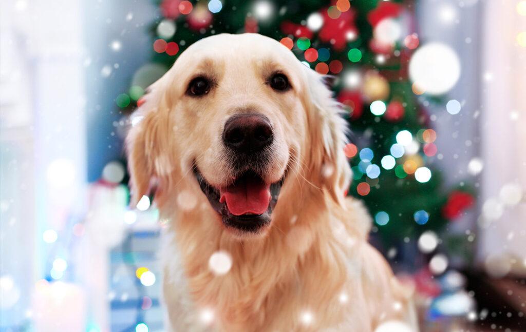 Pas godt på dit kæledyr i den dejlige juletid