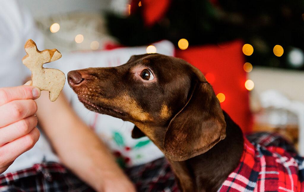 Vidste du, at julemad er farligt for vores kæledyr?