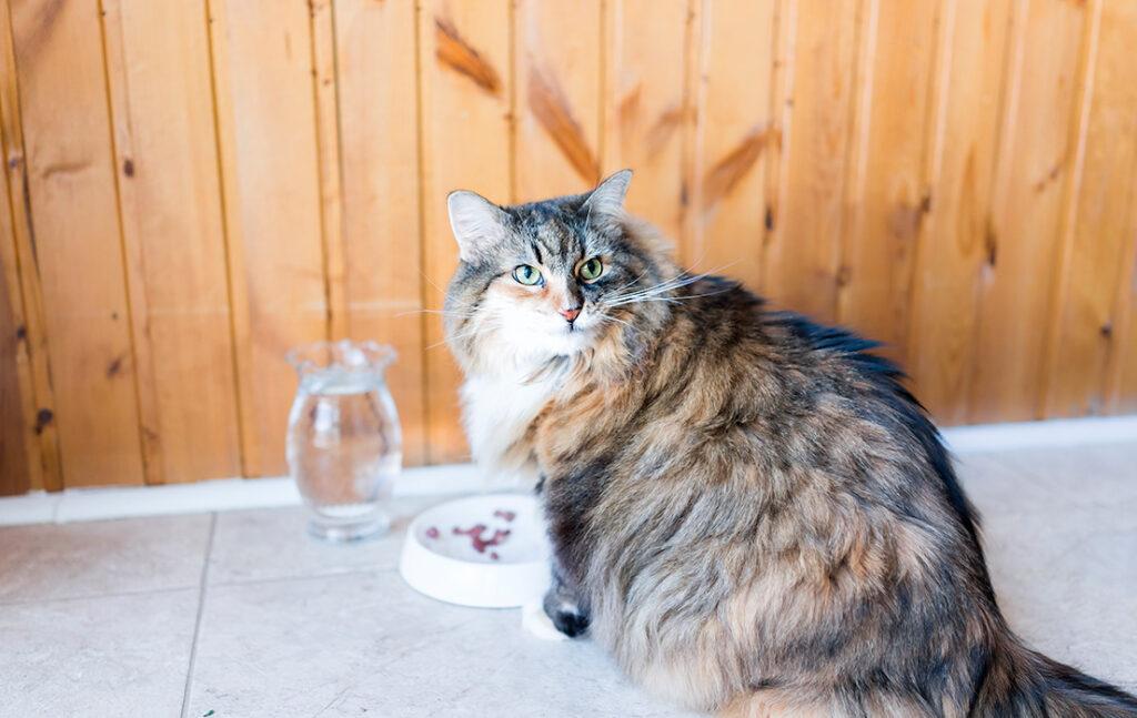 Er din kat kræsen?
