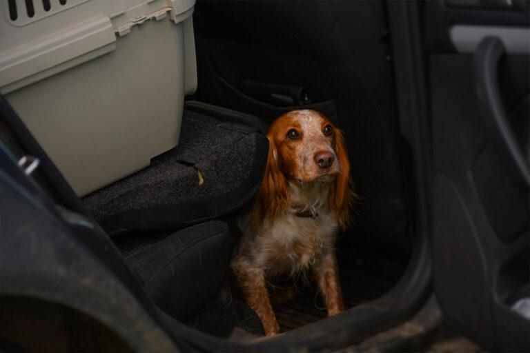 Hader din hund at køre bil?