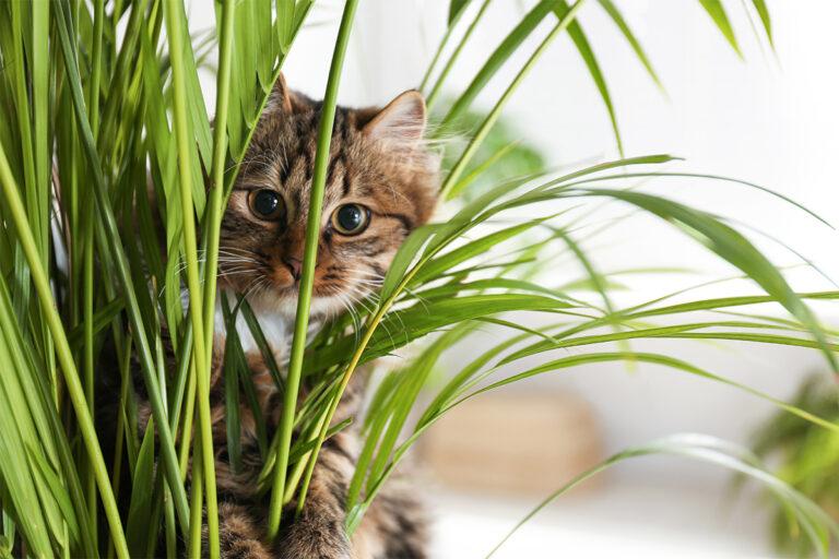 """Pas på din kats """"plante-diæt"""""""